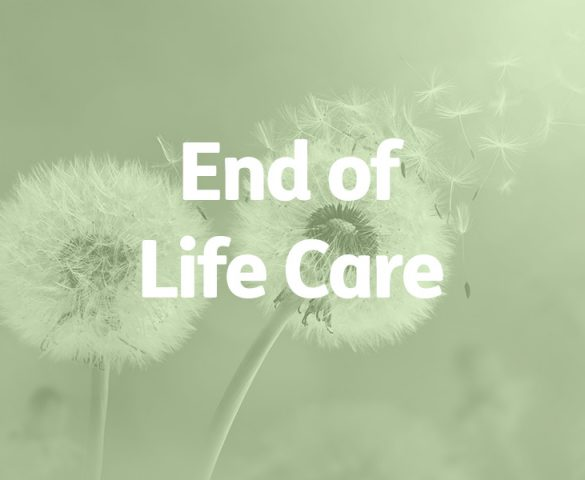 dandelion seedbeds, end of life care concept
