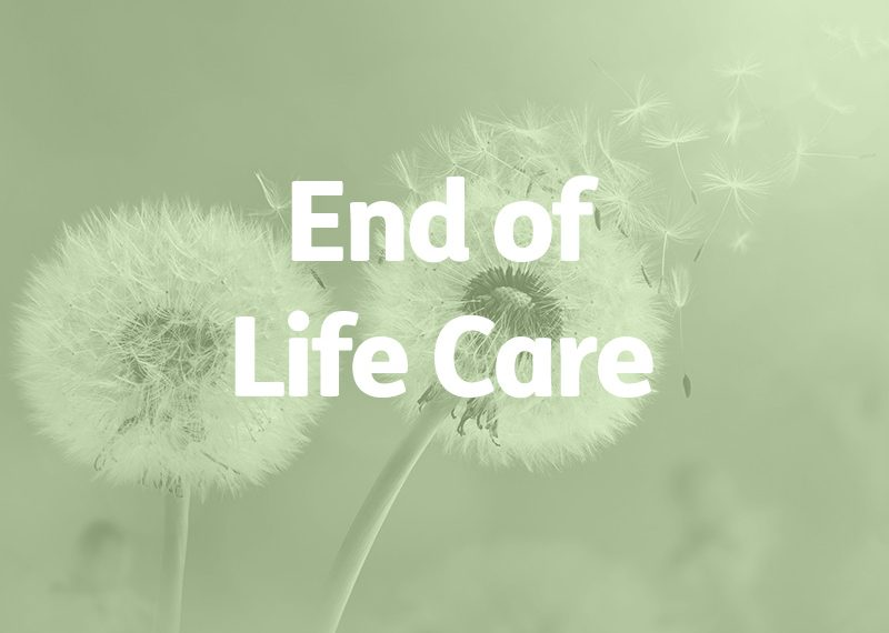 dandelion seedbeds, end of life care concept
